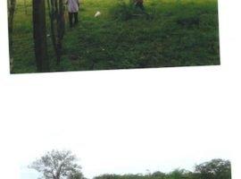 Se vende terreno en San Lorenzo (Chiriqui)